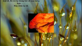Phim Han Quoc | Bo hoa tinh ban | Bo hoa tinh ban