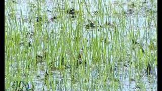 Confini Oltre l'agricoltura (ottava puntata - 21/11/2011) - La produzione di riso nel Mantovano