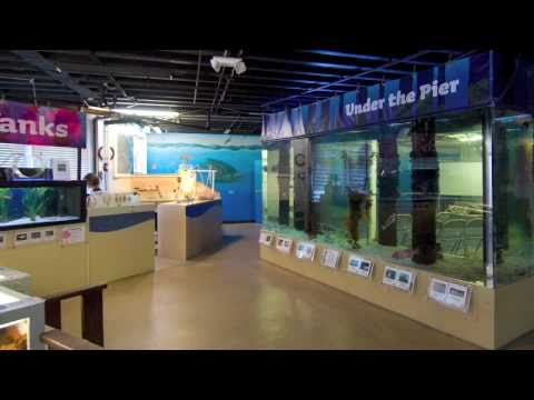 Santa Monica Pier Aquarium Video Tour Youtube