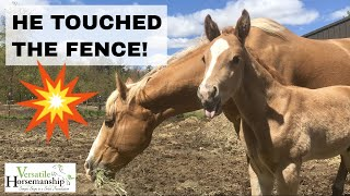 Introducing Foal To Electric Fence + Name Reveal // Versatile Horsemanship