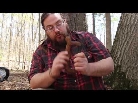 Skills Sundays: Wood stain from Hemlock Bark