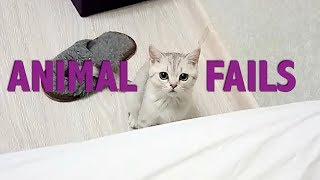 Animal Fails || Manamana