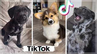 Funny TikTok Doggos That Will Brighten Up Your Day!