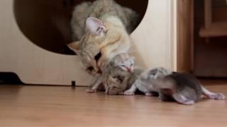 Мама кошка спасла котят