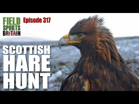 Fieldsports Britain - Scottish hare hunt with eagles