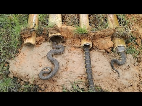 Easy Deep Hole Snake Trap - Amazing Boys Catch Snake With The Bamboo Hole Snake Trap