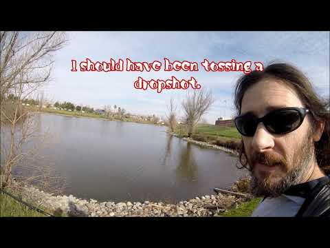 Sacramento Pond Fishing. Tanzanite In January #Sacramentofishing #Tanzanite