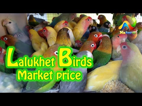 Lalukhet Birds Market price |  Sunday Birds Market  karachi | Parrot For Sale | 4 February  2018
