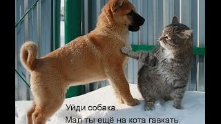 Смешные картинки про кошек и котят Выпуск №60  FUNNY CATS СМЕШНЫЕ КОШКИ