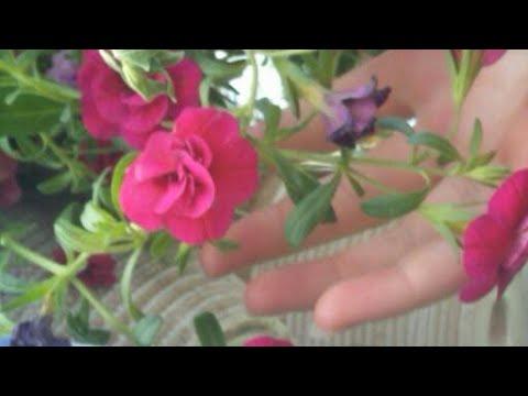 Flowers In Eden