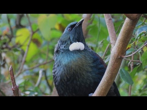 Tui song .