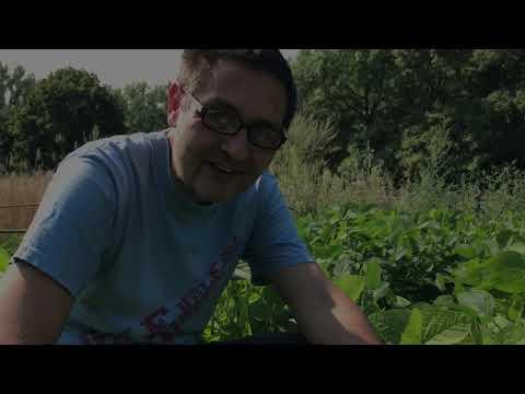 Welt-Ackertagebuch - Sonnenblume, Lernen auf dem Acker, Soja in der Blüte