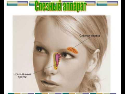 Строение и функции органа зрения