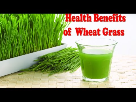 गेहूँ की घास के फ़ायदे, Health Benefits of wheatgrass Juice for weight loss, Skin, Hair & Anemia