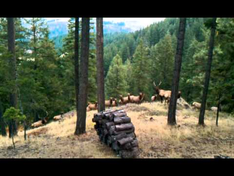 Elk herd cabin near cle elum wa youtube for Cle elum lake cabins
