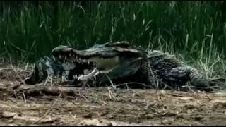 فيلم روعة شاهد ولن تندم Crocodile  film horror