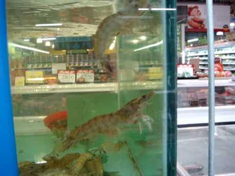 LIVE shrimp swimming
