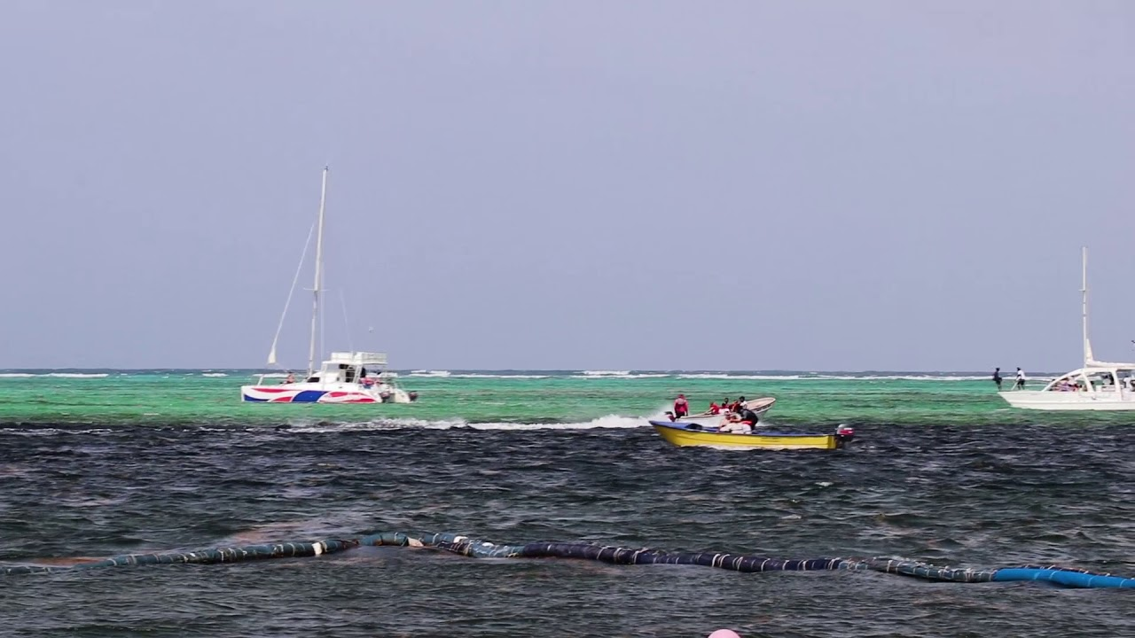 Seaweed Punta cana Bavaro Beach at the Level Melia Resort 2018