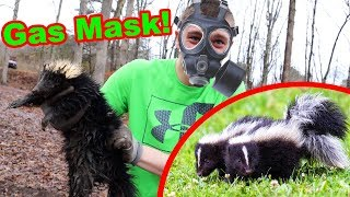 I CAUGHT A SKUNK!!! Sprayed