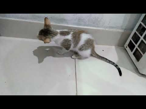 Black & White Cat with Kitten Aged 106 Days Breakfast Brown Cat with Kittens Watching(1)
