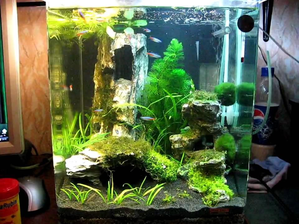 dennerle nano cube 30l 15 02 10 9day after start fish eating youtube. Black Bedroom Furniture Sets. Home Design Ideas