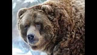 Top 10 Most Dangerous Animals In The Mountains