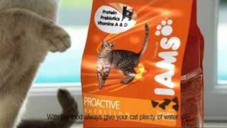 New UK IAMs Cat TV Advert
