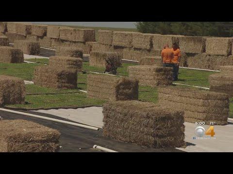 BEARDO - Some Concerned With Pilot Program Allowing Felons To Work On Hemp Farm