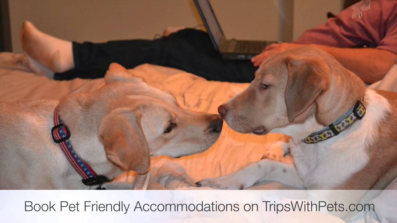 Pet Friendly Hotels Asheville North Carolina