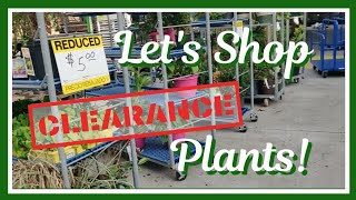Shopping for Clearance Plants� Vlog pt.1 || Kreatyve Laydiiee