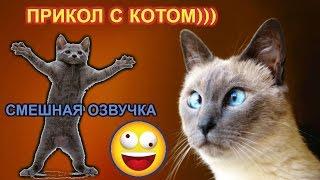 Прикол с котом.  Смешная озвучка. Смешное видео. Юла. Русский голубой кот. ЕФИМ по паспорту