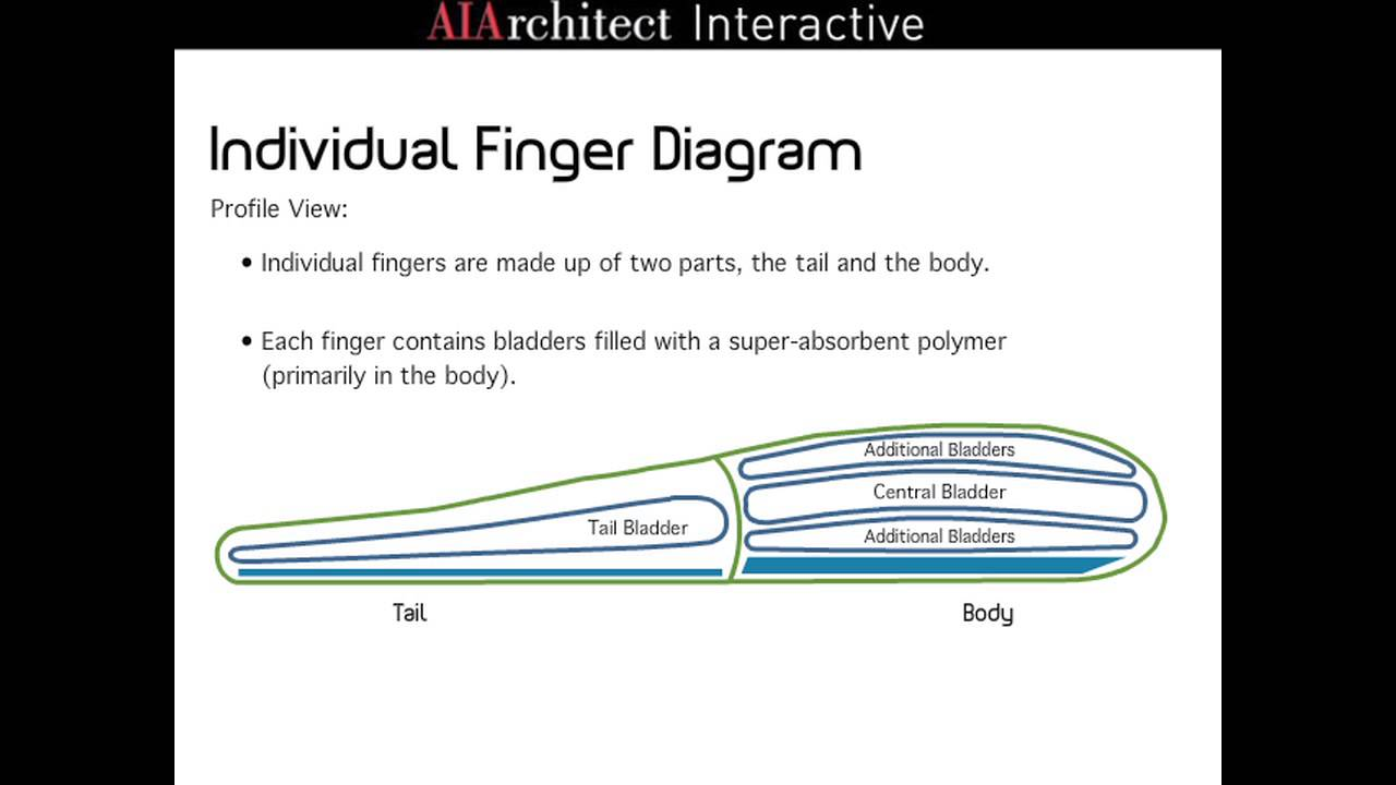 Finger sponge diagram information of wiring diagram alluvial sponge combs youtube rh youtube com sponge diagram no labels grasshopper diagram ccuart Images
