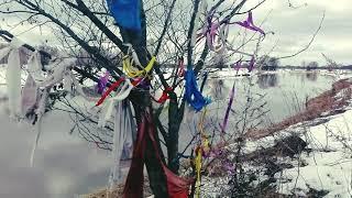 Обряд на исполнение желаний через Духов Деревьев. Уроки колдовства #120