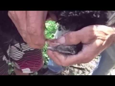 Como dar correctamente las pastillas de las lombrices a los perritos