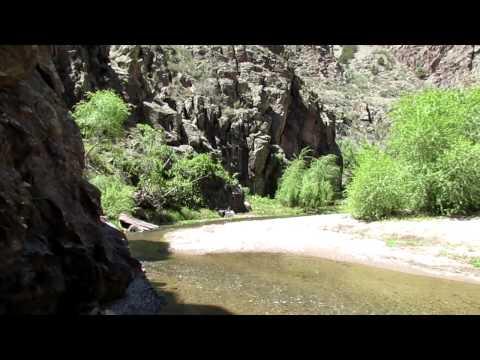 song of canyon wren