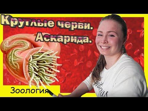 Круглые черви. Аскарида. Урок биологии №69.
