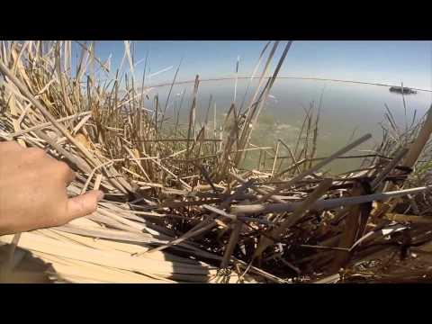 California Snow Goose Hunting