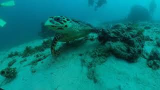 [사방비치 다이빙]  거북이랑 투샷~