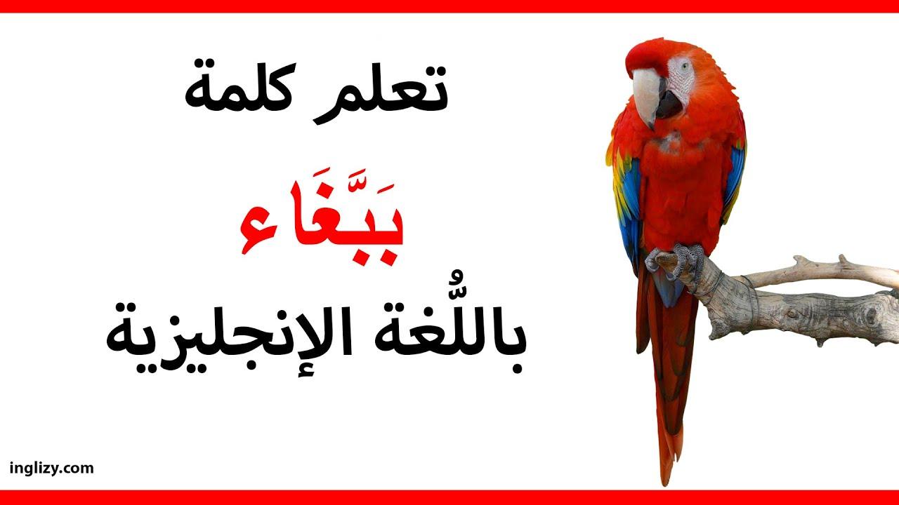 ترجمة Swing في العربي ة قاموس 11