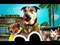 Собаки спешат на помощь Классный фильм Rescue Dogs 2016 mp3