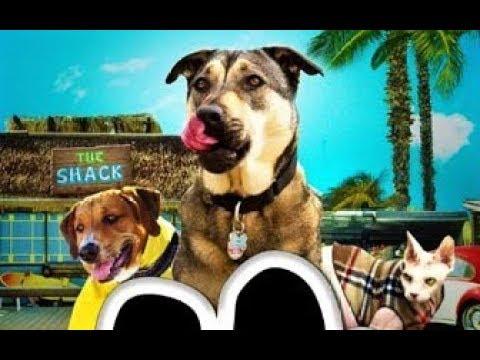 Собаки спешат на помощь Классный фильм Rescue Dogs 2016