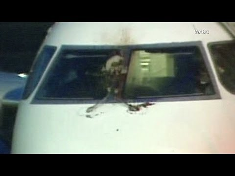 JetBlue flight makes emergency landing after striking bird; passenger claims engine blade cracked