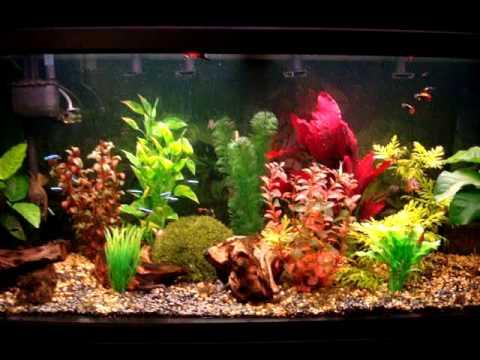 200 litres aquarium in athens hellas youtube for Aquarium 200 litres