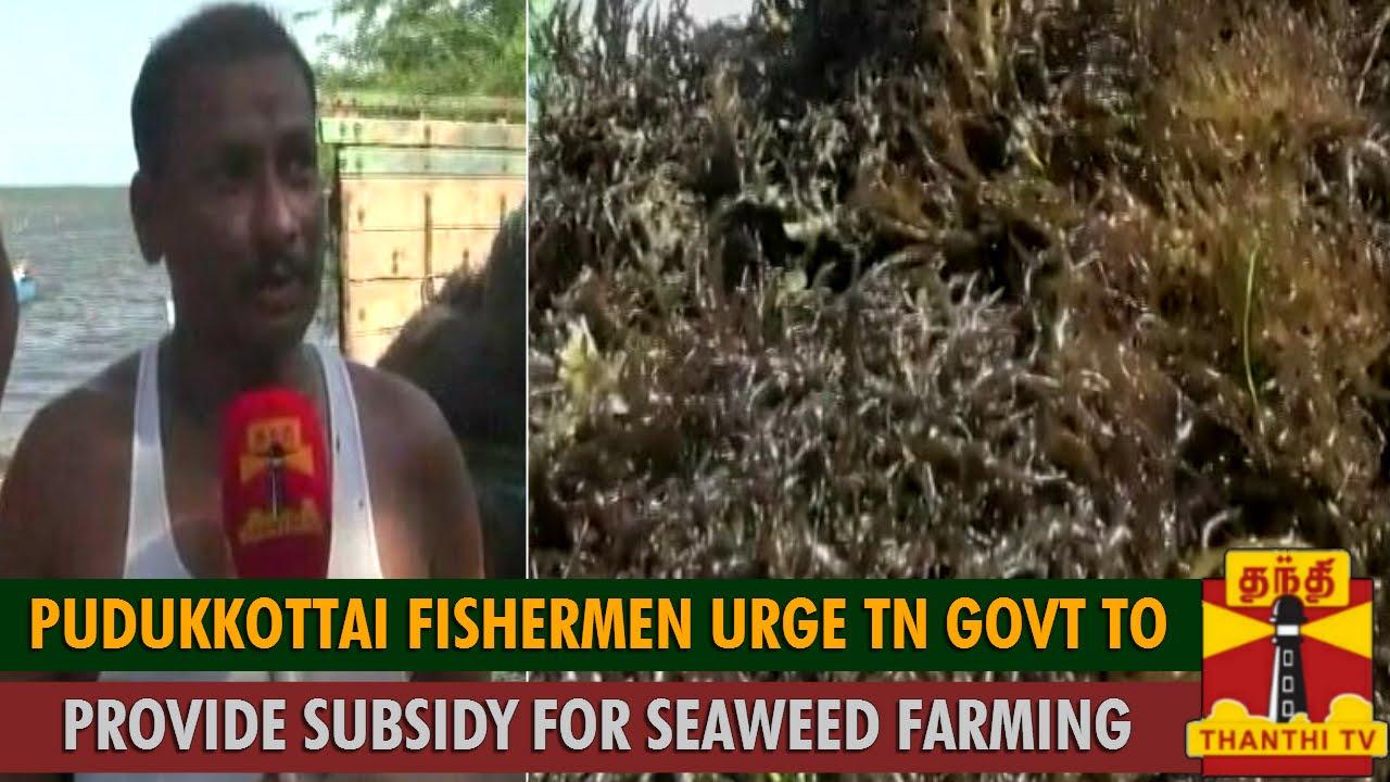 Pudukkottai Fishermen Urge Tamil Nadu Govt  Provide Subsidy for Seaweed  Farming - Thanthi TV