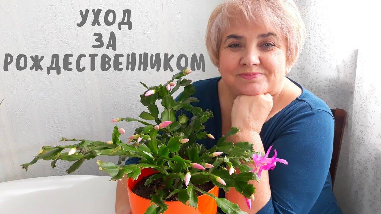Цветы и уход за комн цветами
