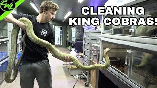 CLEANING KING COBRAS & FEEDING CROCS!!!