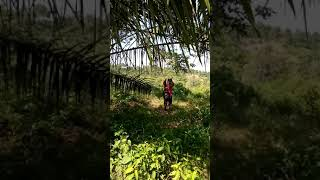 Suku Mante Di Pedalaman Aceh