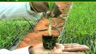 Know how to get better yield of sugarcane | Annadata