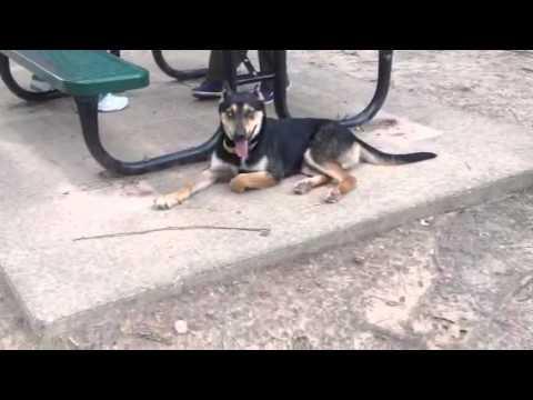 Video of adoptable pet named Glacier in Texarkana Texas