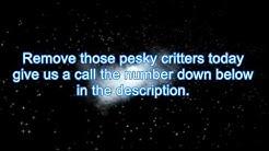 Pest Control Winslow 844-370-8545